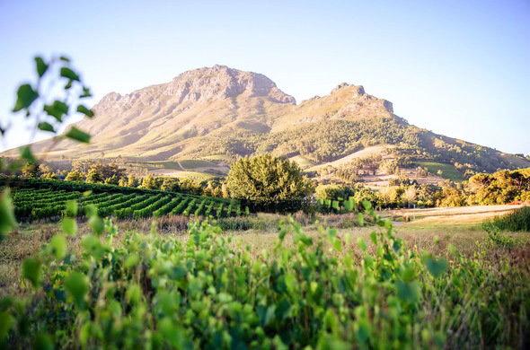Cape Winelands Wedding Venues Town
