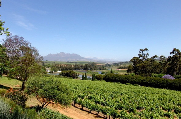 Devon-Valley-Stellenbosch-View-Winelands
